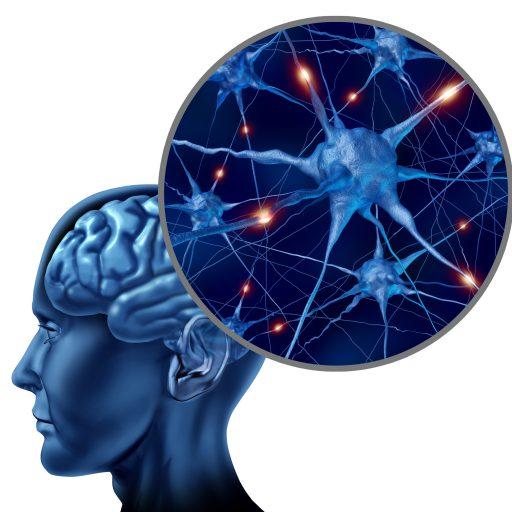 cropped-creier-neuroni1.jpg